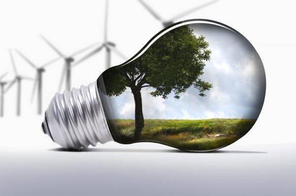 Lâmpada com árvore, que representa a inovação sustentável.